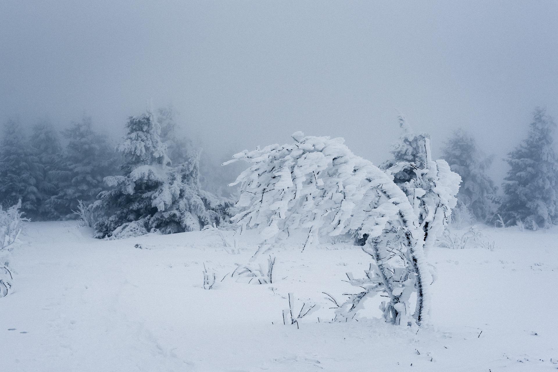 меньше картинки зимней метели вьюги пурги обои рабочий