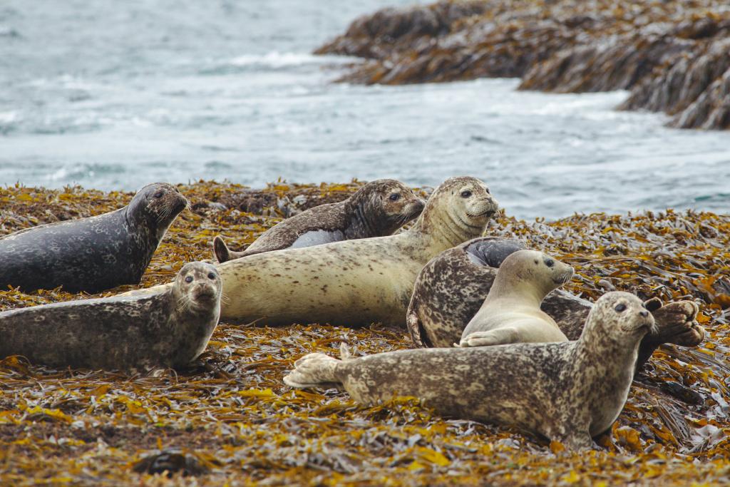 все о тюленях и их картинки синдроме отмены гормональных